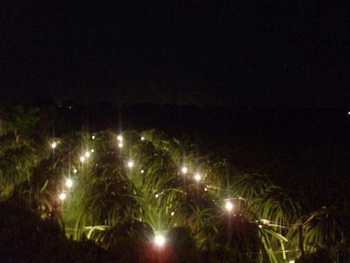 Chiếu sáng trong ngành nông nghiệp