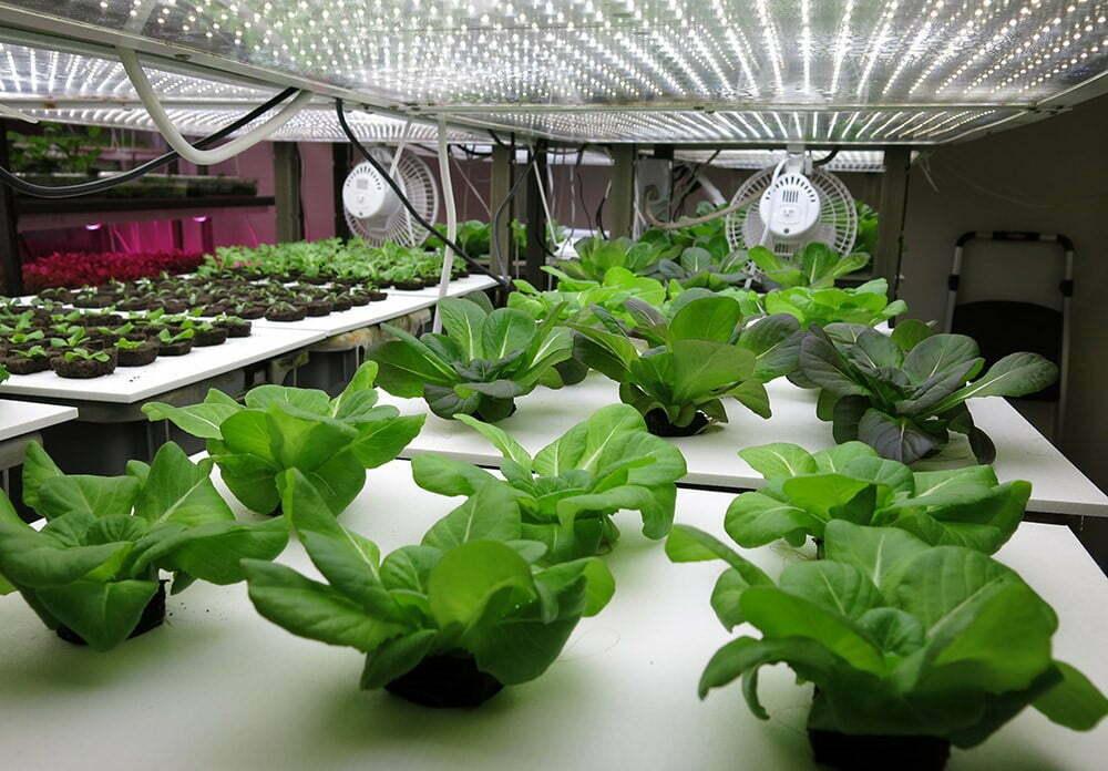 Nhu cầu sử dụng ánh sáng cho cây trồng ngày càng cao